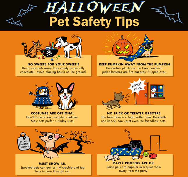 halloween dog tips